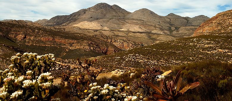 Prince Albert Info www.prince-albert-info.co.za, activities and accommodation in Prince Albert, Western Cape, South Africa